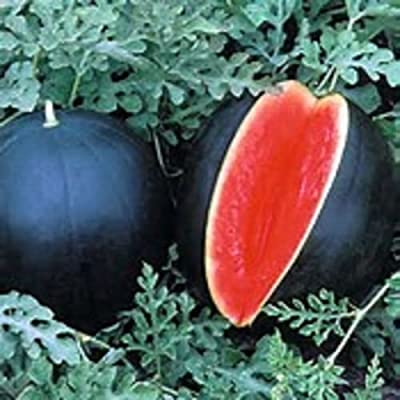 25 BLACKTAIL BLACK CANNONBALL WATERMELON Seeds Heirloom No GMO RARE