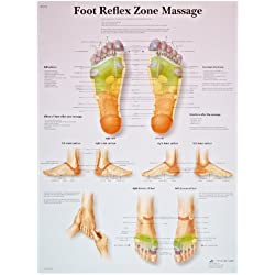 "3B Scientific VR1810UU Glossy Paper Foot Reflex Zone Massage Anatomical Chart, Poster Size 20"" Width x 26"" Height"