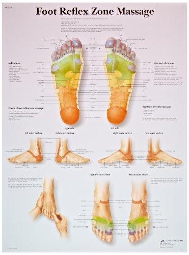 3B Scientific VR1810UU Glossy Paper Foot Reflex Zone Massage Anatomical Chart, Poster Size 20″ Width x 26″ Height