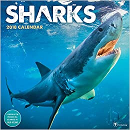 Amazon com: 2018 Sharks Wall Calendar (0619344321186): Wild