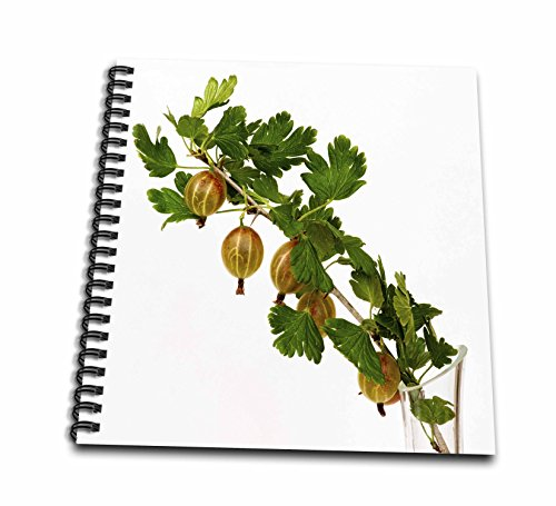 3dRose Alexis Photography - Food Gooseberry - Gooseberry berries on a twig in glass vase. White backdrop - Memory Book 12 x 12 inch (Food Photographic Memory)