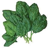 Burpee Bloomsdale Spinach Seeds 1100 seeds