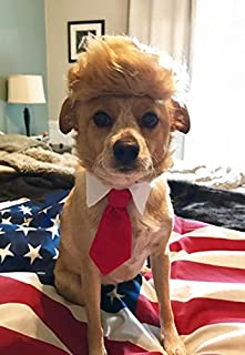 Trump Style Pet Costume Dog Wig Donald Dog Clothes with Collar u0026 Tie Head Wear : watermelon fairy costume  - Germanpascual.Com