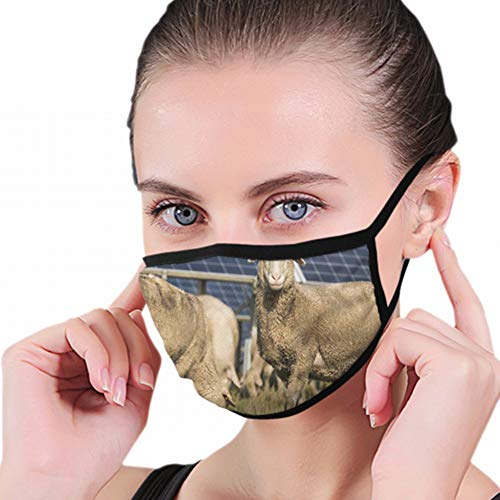 Solar Panels Sheep Industrial Washable Reusable Mouth Mask Cotton Anti Dust Half Face Mouth Mask For Men Women Dustproof With Adjustable Ear Loops from Cool pillow