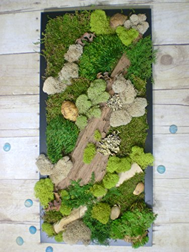 Preserved Moss and Fern Wall Hanging Art Decor by Trinkets and Words