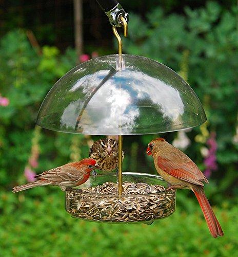 Buy cardinal feeder