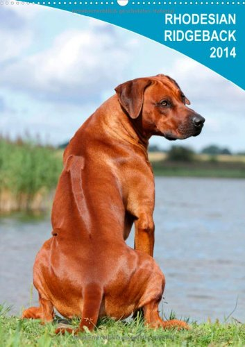 Rhodesian Ridgeback 2014 (Wandkalender 2014 DIN A4 hoch): Wandkalender 2014 (Monatskalender, 14 Seiten)