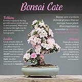 "Bonsai 3pc Set - 11"" Knob Cutter, 7"" Trimming"