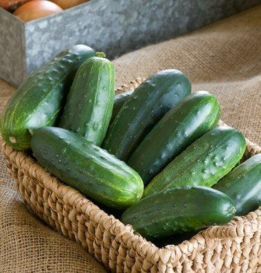 David's Garden Seeds Cucumber Pickling Jackson Classic D3847 (Green) 50 Hybrid Seeds