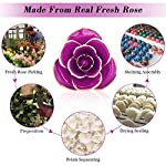 Gold-Plated-Rose-24K-Forever-Preserved-Real-Rose-Gift-for-Lover-Mom-Wife-Daughter-Girl-Friend-Unique-Present-on-Valentines-Day-Wedding-Anniversary-Birthday-Proposal-Reward-Purple-with-Stand