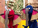 Grover's Street Safari
