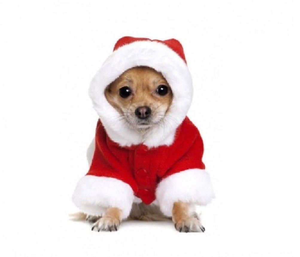 Fair Vestito con Cappuccio da Babbo Natale per Cani di Piccola e Media Taglia Misura XL