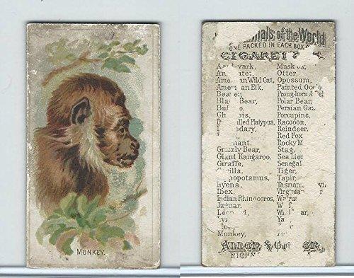 N25 Allen & Ginter, Wild Animals, 1888, Monkey