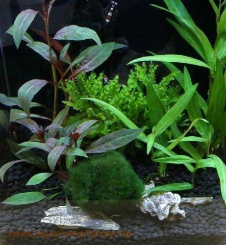 Muhlan Wasserpflanzen Nano Ii Set Aquarium 15 25 L Pflanzen Kies Deko Amazon De Garten