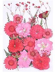 HEALLILY DIY Flores Secas Y Prensadas Accesorio de Uñas para Joyas de Resina Artesanías Pegatinas de Uñas Caja del Teléfono Marcador DIY