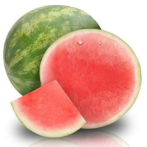 50 seedless Watermelon Seeds Watermelon Seeds Sweet Juice Tasty Growing Set