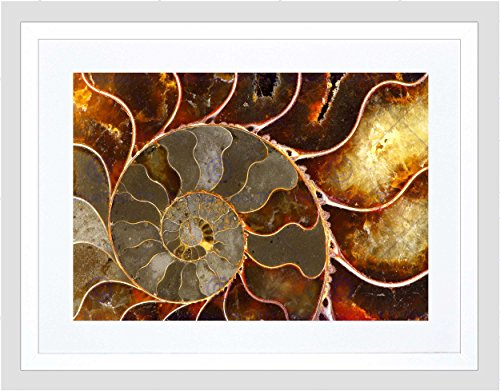 PHOTO MACRO CLOSE UP FOSSIL AMMOLITE SHELL COOL FRAMED ART PRINT MOUNT B12X13168