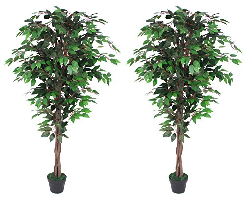 Pair Of AMERIQUE Gorgeous 6 Feet Ficus Trees Artificial Silk Plant, with Nursery Plastic Pots, Feel Real Technology, Super Quality, Green by AMERIQUE