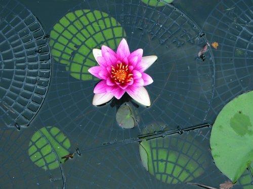 Netfloat Pond Netting Rings for Pest & Heron Deterrent Protection for Fish Ponds NF-201R