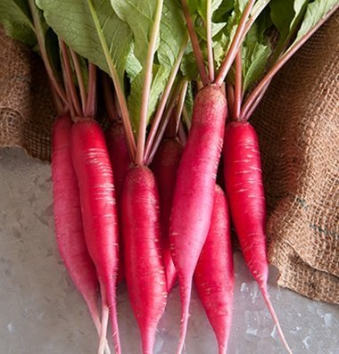 David's Garden Seeds Radish Shunkyo Semi-Long D611 (Pink) 200 Open Pollinated Seeds