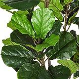 Woooow 6 Feet Artificial Fiddle Leaf Fig Tree in