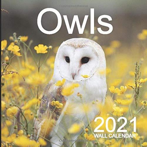 Owl Calendar 2021 Owls 2021 Wall Calendar: Mini Wall Calendar Owl Photography 12