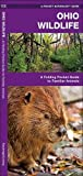 Ohio Wildlife: A Folding Pocket Guide to Familiar Species (A Pocket Naturalist Guide)