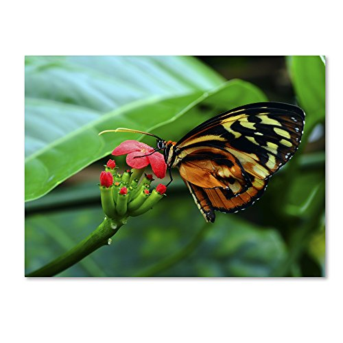 picture of Trademark Fine Art Cream Spotted Tigerwing Wall Decor by Kurt Shaffer, 24 by 32""