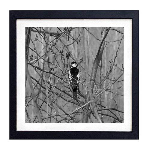 (GLITZFAS PRINTS Framed Wall Art - Woodpecker Bird Tree Branches - Art Print Black Wood Framed Wall Art Picture for Home Decoration - 20