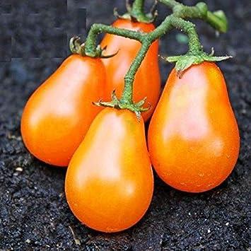 d/élicieux de balcon de jardin de Fruits et arbres fruitiers 100pcs Graines de tomate rares de fruit organique Graines biologiques Graines de l/égumes r/ésistante au froid ROCONAT Graines