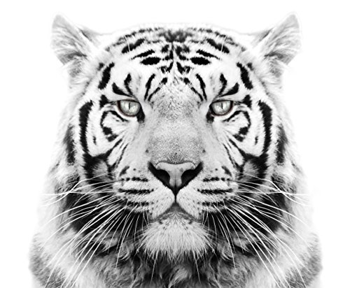 White Tiger Edible Icing Image for 6 inch Round Cake (Tiger Images)