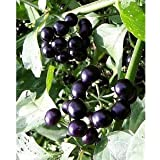 *Seeds and Things Garden Huckleberry Bush 35 Seeds