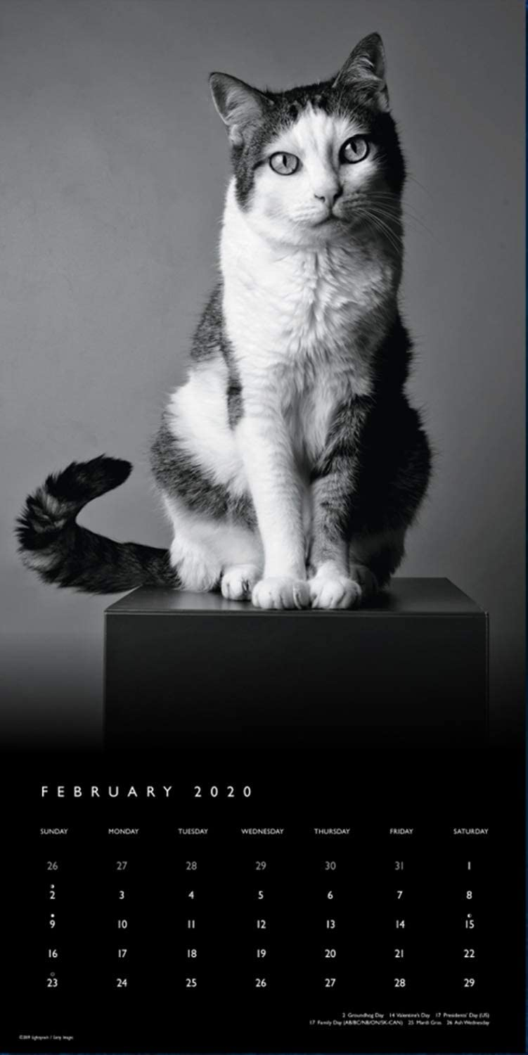 "Goldistock 2020 Large Wall Calendar -""The Regal Cat with Poster-Sized Images"" - 12"" x 24"" (Open) - Thick & Sturdy Paper - - Striking Black & White Oversized Photos - Art Calendar"