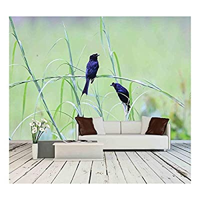 Greater Racket Tailed Drongo Birds Wall Decor - Wall Murals