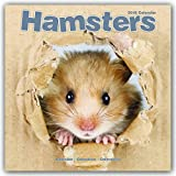 Hamster Calendar - Cute Animal Calendar - Calendars 2017 - 2018 Wall Calendars - Animal Calendar - Hamsters 16 Month Wall Calendar by Avonside