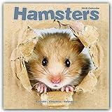 Hamster Calendar - Cute Animal Calendar - Calendars 2017 - 2018 Wall Calendars - Animal Calendar - Hamsters 16 Month Wall Calendar by Avonside