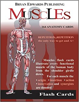 The Muscles (Flash Cards) (Flash Anatomy): Flash Anatomy ...