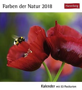 Harenberg-Verlag Postkartenkalender Pferde mit 53 heraustrennbaren Postkarten Kalender 2019 16 cm x 17,5 cm