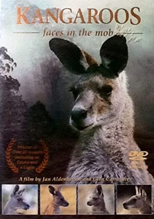 Kangaroos: Faces in the Mob