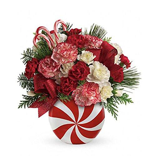 Telefloras Peppermint Christmas Vase
