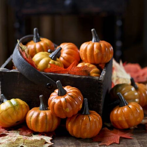 Factory Direct Craft Realistic Fall Mini Artificial Pumpkins - Package of 16 Pumpkins ...]()