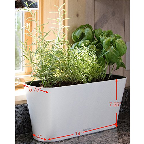 Aquaphoric Herb Garden Tub - Self Watering Passive Hydroponic Planter + Fiber Soil, Keeps Indoor Kitchen Herbs Fresh and Growing for Weeks on Your Home Windowsill. Compact, Attractive and Foolproof.