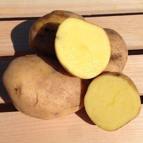 Yukon Gold patate da seme//Tuberi standard di colore giallo-carne.