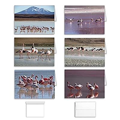 Flamingo Cards Note Card Value Pack Set of 12 Assorted Blank Inside All Occasion Foldover Cards with Envelopes, Bulk Variety Assortment of 6 Different Designs