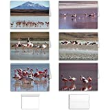 Bird Note Cards: Blank Inside Pink Flamingo Greeting Set of 12 (6 Assorted Designs) to use for Birthday, Thank You or All Occasion, Made in USA