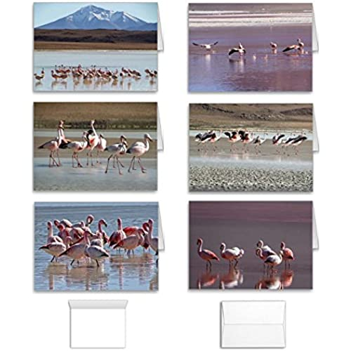 Bird Note Cards: Blank Inside Pink Flamingo Greeting Set of 12 (6 Assorted Designs) to use for Birthday, Thank You or All Occasion, Made in USA Sales
