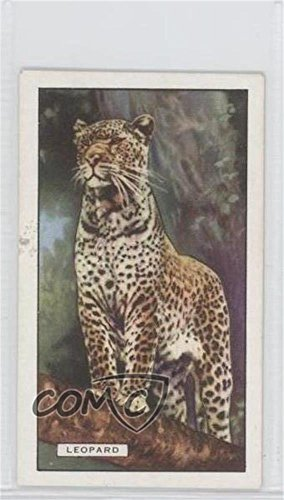 The Leopard (Trading Card) 1937 Gallaher Wild Animals - Tobacco [Base] #37 from Gallaher Wild Animals