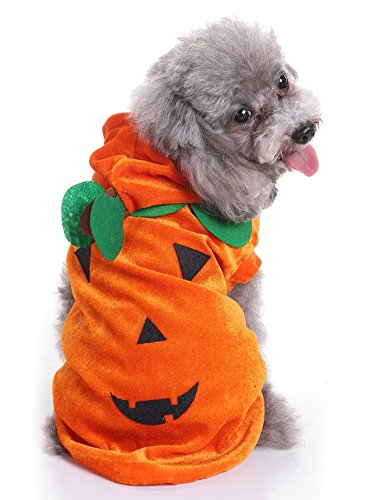 MaruPet Halloween Fancy Pumpkin Dogs Cats Warm Costumes Hoodied for Teddy, Pug, Chihuahua, Shih Tzu, Yorkshire Terriers, Papillon M-Orange