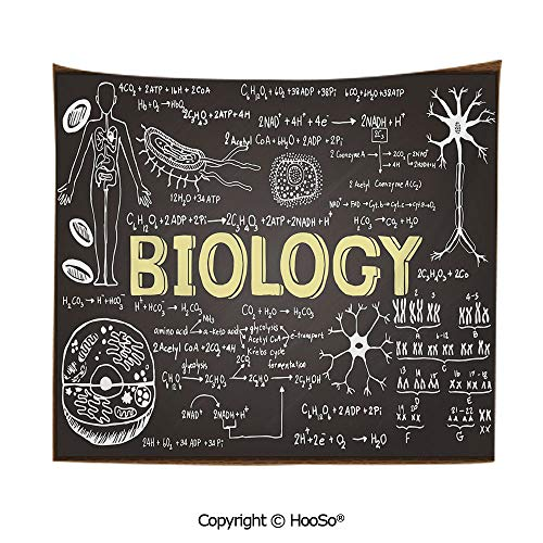 Brown Paisley Needlepoint (Durable Washable and Reusable tapestry wall hanging carpet 59x79in,Black Chalkboard Biology Hand Written Symbols School Classroom Decorative,Black Brown Pale Yellow Comfy and No Strange Odor home dec)