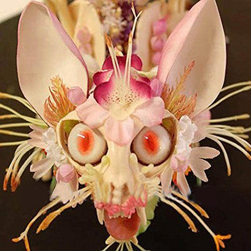 Znadna Seeds - Monkey Face Orchid Seed Rare Flower Seeds Ornamental Seeds Perennial Hardy for Garden Balcony/Patio